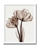 インテリアアート/Steven N. Meyers/Parrot Tulips II