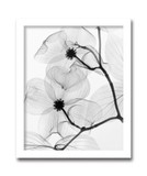 インテリアアート/Steven N.Meyers /Dogwood Blossoms