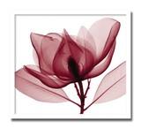 インテリアアート/Steven N. Meyers/Red Magnolia