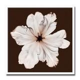 インテリアアート/Steven N. Meyers/Ruffled Tulip (Oversize)