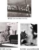 ■ポストカード■白黒写真 猫