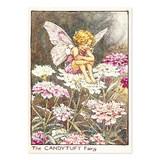 【原画の魅力をそのままに】ポストカード<Candytuft Fairy>