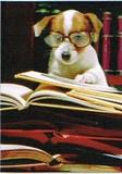 AVANTI PRESS グリーティングカード [卒業向きカード] <犬×めがね>
