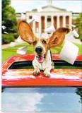 AVANTI PRESS グリーティングカード [卒業向きカード] <犬×車>