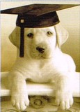 AVANTI PRESS グリーティングカード [卒業向きカード] <犬>