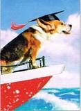 AVANTI PRESS グリーティングカード [卒業向きカード] <犬×海>