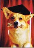 AVANTI PRESS グリーティングカード [卒業向きカード] <犬×骨>