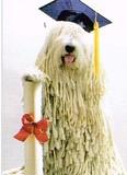 AVANTI PRESS グリーティングカード [卒業向きカード] <犬×帽子>
