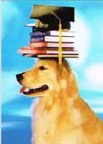 AVANTI PRESS グリーティングカード [卒業向きカード] <犬×本>
