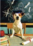 AVANTI PRESS グリーティングカード [卒業向きカード] <犬×黒板>