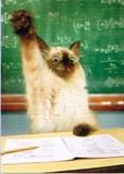 AVANTI PRESS グリーティングカード [卒業向きカード] <猫>
