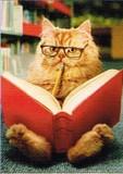 AVANTI PRESS グリーティングカード [卒業向きカード] <猫×メガネ>