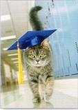 AVANTI PRESS グリーティングカード [卒業向きカード] <猫×帽子>