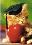 AVANTI PRESS グリーティングカード [卒業向きカード] <猫×りんご>