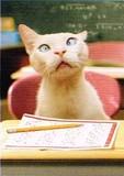 AVANTI PRESS グリーティングカード [卒業向きカード] <猫×鉛筆>