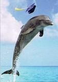AVANTI PRESS グリーティングカード [卒業向きカード] <イルカ×海>