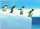 AVANTI PRESS グリーティングカード [卒業向きカード] <ペンギン>