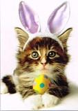 AVANTI PRESS グリーティングカード [イースター用] <ウサギ×猫>