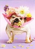 AVANTI PRESS グリーティングカード [イースター用] <犬×フラワー>
