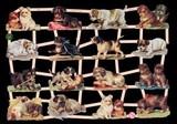 Ernst Freihoff スクラップシート <犬> *クロモス