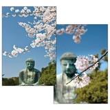 ステーショナリー/桜シリーズ/桜3DフォトポストカードC4