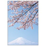 ステーショナリー/桜シリーズ/桜フォトポストカード