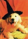 AVANTI PRESS グリーティングカード ハロウィン 犬 魔法使いの帽子