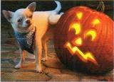 AVANTI PRESS グリーティングカード ハロウィン 犬 かぼちゃ