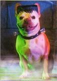 AVANTI PRESS グリーティングカード ハロウィン 犬 フランケンシュタイン