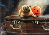 AVANTI PRESS グリーティングカード ハロウィン 犬 棺 かぼちゃ