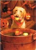 AVANTI PRESS グリーティングカード ハロウィン 犬 かぼちゃ 桶
