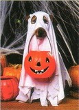 AVANTI PRESS グリーティングカード ハロウィン 犬 かぼちゃ 幽霊