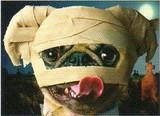 AVANTI PRESS グリーティングカード ハロウィン 犬 包帯