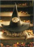 AVANTI PRESS グリーティングカード ハロウィン 猫 魔法使いの帽子