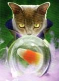 AVANTI PRESS グリーティングカード ハロウィン 猫 水晶