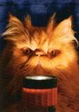 AVANTI PRESS グリーティングカード ハロウィン 猫 懐中電灯