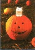 AVANTI PRESS グリーティングカード ハロウィン 猫 かぼちゃ