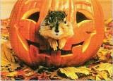 AVANTI PRESS グリーティングカード ハロウィン  かぼちゃ リス