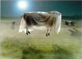 AVANTI PRESS グリーティングカード ハロウィン  空飛ぶ牛