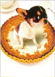 AVANTI PRESS サンクスビギングカード 犬