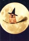AVANTI PRESS グリーティングカード ハロウィン 犬 魔女のホウキ