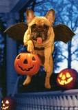 AVANTI PRESS グリーティングカード ハロウィン 犬 こうもり かぼちゃ