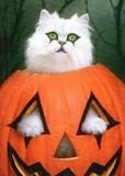 AVANTI PRESS グリーティングカード ハロウィン ねこ かぼちゃ