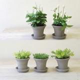 【PRE SALE】[ボタニカル]お水のいらない植木鉢