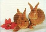ART UNLIMTED ポストカード <ウサギ×フラワー>