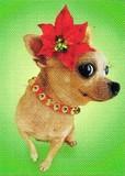 AVANTI PRESS クリスマスカード<犬×ポインセチア>