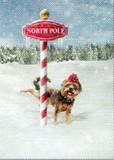 AVANTI PRESS クリスマスカード<犬×ぼうし×雪>