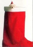 AVANTI PRESS クリスマスカード<犬×ブーツ×ぼうし>