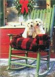 AVANTI PRESS クリスマスカード<犬×イス×毛布>