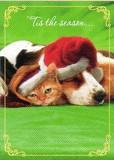 AVANTI PRESS クリスマスカード<犬×猫×ぼうし>